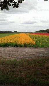 Dutch Flowers1